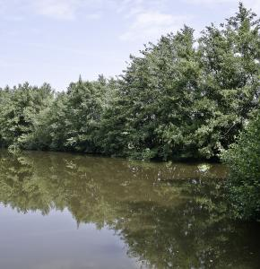 L'étang du Pesquè 1bis été 2012.jpg