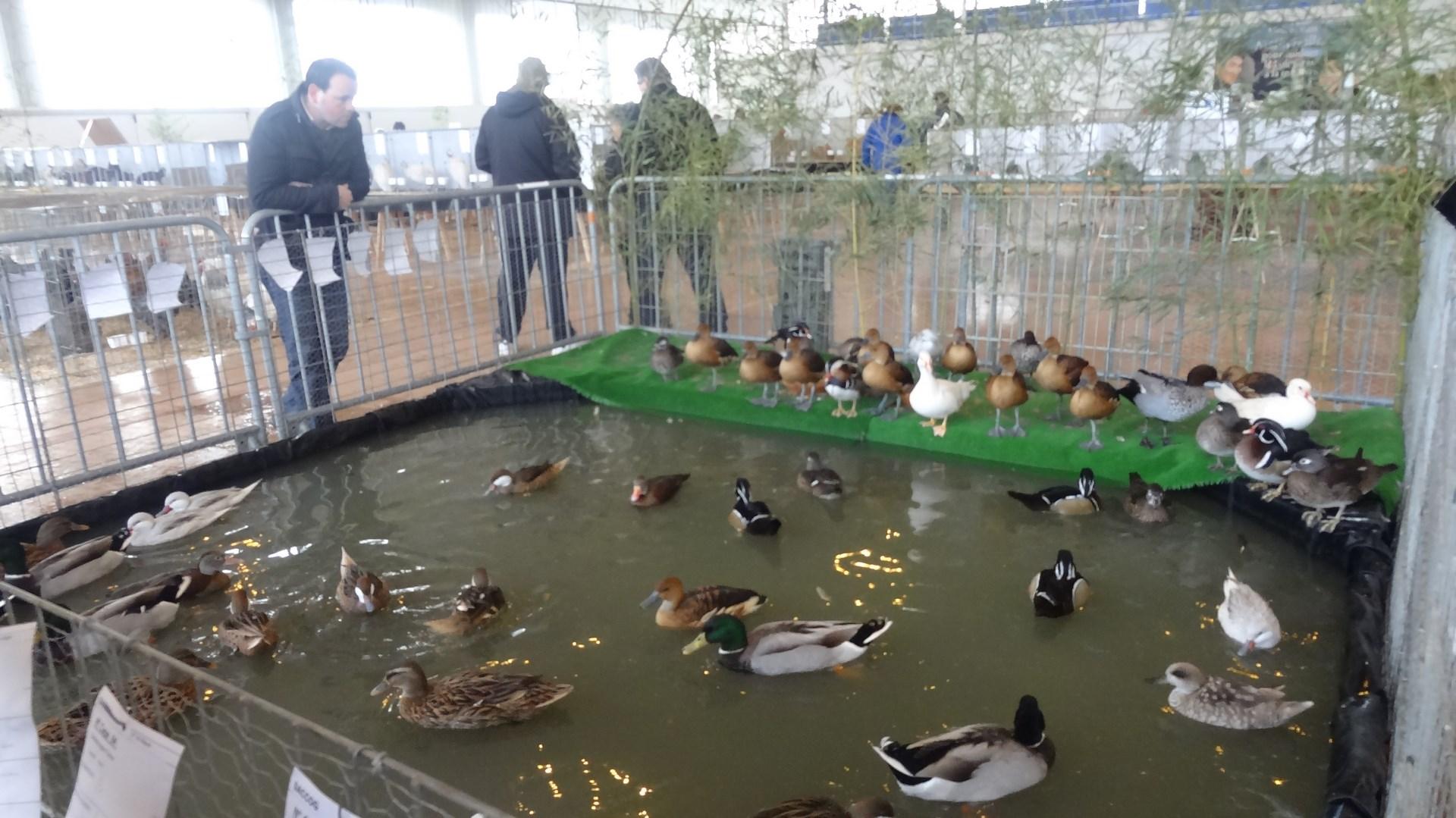 Basse La Gers Cour Expo Du Journal D'animaux De Le Vente Avec Saccog QrEWCxedBo