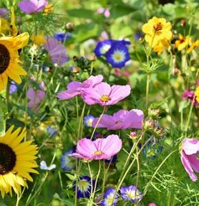 flower-meadow-3598555__340.jpg