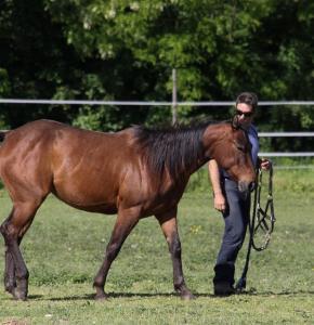 horse-587015_960_720.jpg