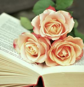 book-1771073_960_720.jpg