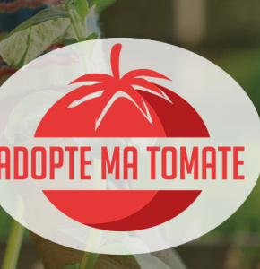 Adopte ma tomate.PNG