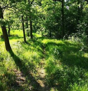 Trail Simorre bis.JPG