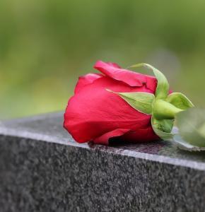 single-red-rose-4208144_960_720.jpg