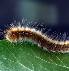 caterpillar-1727984_640.jpg