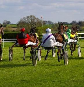 Trot courses chevaux.JPG