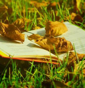 book-5548611_960_720.jpg