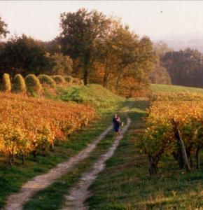 cvg Vignoble en automne.jpg