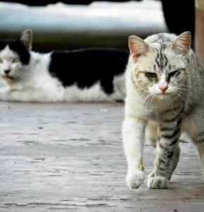cat-175733_960_720.jpg