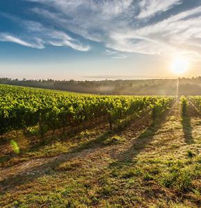 paysage-vignes (1).png