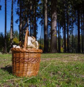 basket-full-of-mushrooms-973x649.jpg