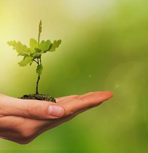 leaf-tree-young-seedling.jpg