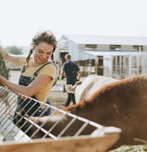 animals-blond-hair-cattle-close-up.jpg