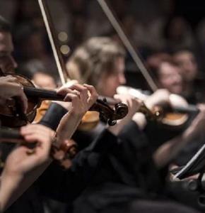 violins-1838390__340.jpg